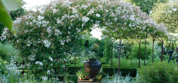 white_sissinghurst-white-rose